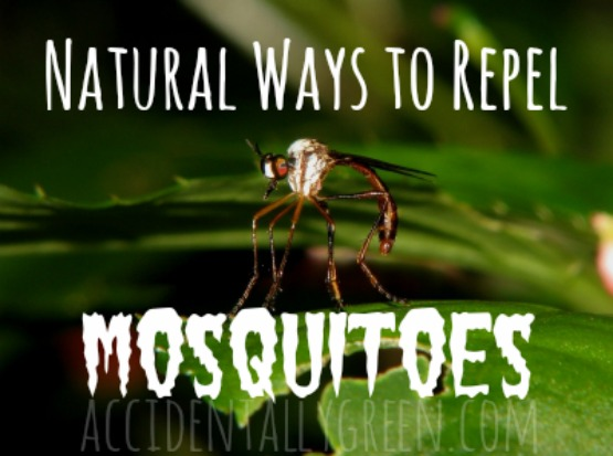 Natural Ways to Repel Mosquitoes {Accidentally Green}