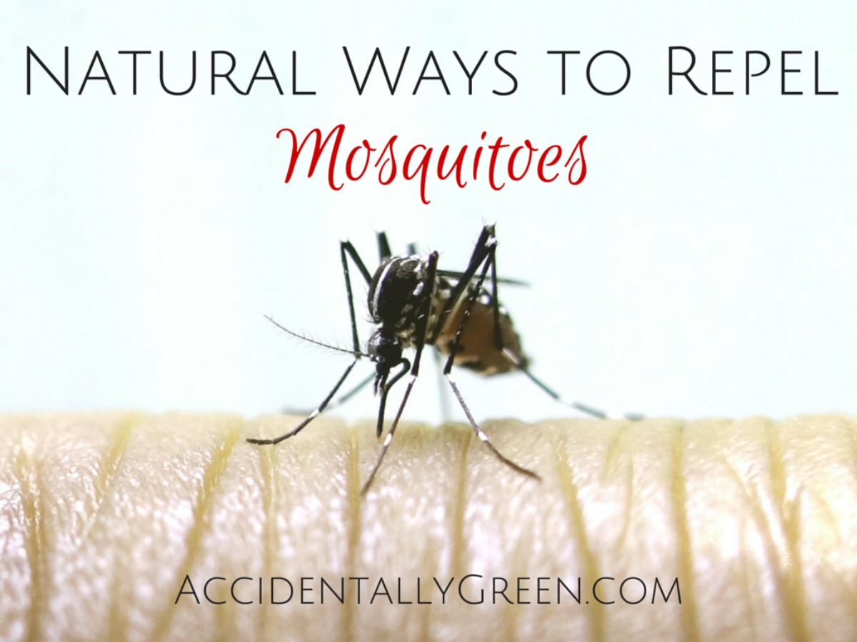Did you know there are many natural ways to repel mosquitoes? Since all of these are natural remedies, pick one to try before you head outside again!