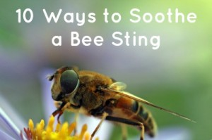 10 Ways to Soothe a Bee Sting