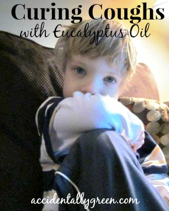 Curing Coughs with Eucalyptus Oil {accidentallygreen.com}