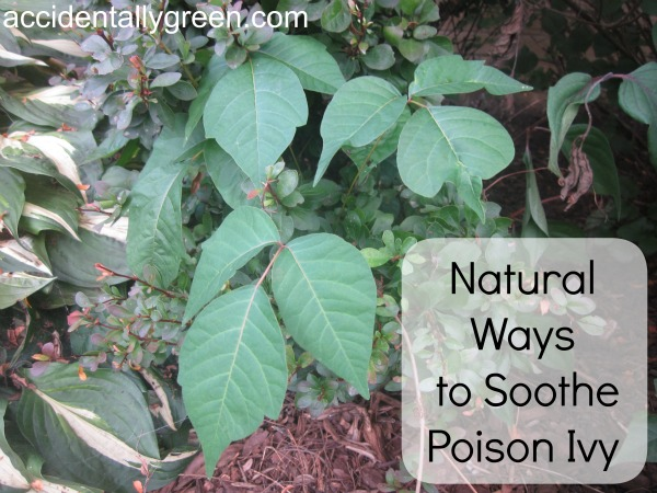 Natural Ways to Soothe Poison Ivy - Accidentally Green