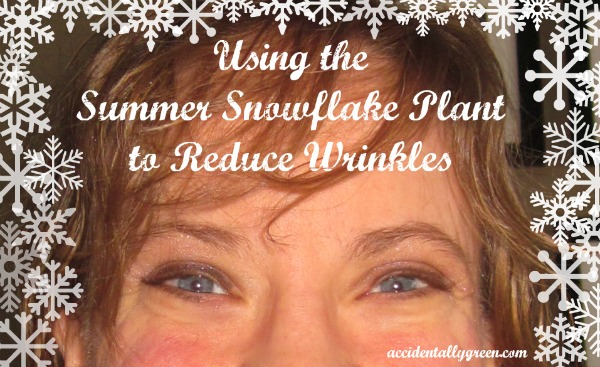 Using the Summer Snowflake Plant to Reduce Wrinkles {Accidentally Green}
