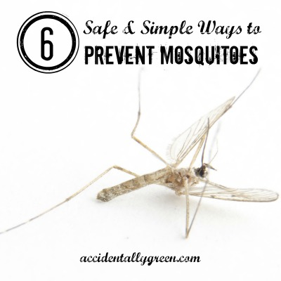 6 Safe and Simple Ways to Prevent Mosquitoes {accidentallygreen.com}