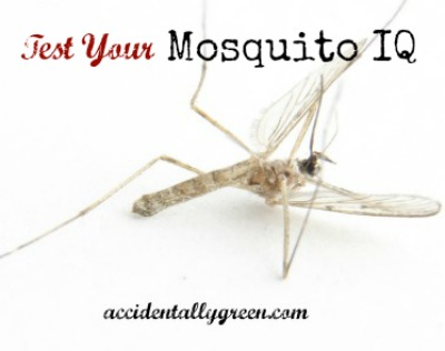 Test Your Mosquito IQ {accidentallygreen.com}