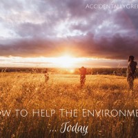 How to Help The Environment … Today
